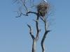wd-pantanal-2008-048