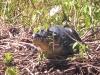 wd-pantanal-2008-063