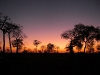 wd-pantanal-2008-089