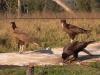 wd-pantanal-2008-105
