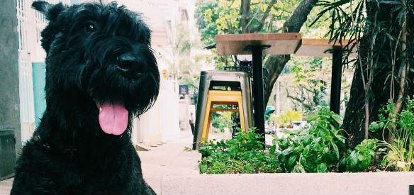 pet-dog-cachorro-onde-levar-para-passear-restaurante-complex-esquina-11-ipanema-carioca-bossame